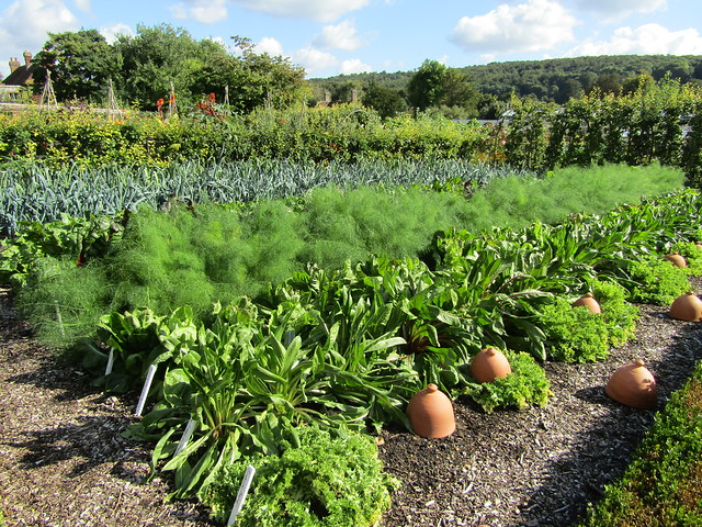 Vegetable patch definition meaning for Vegetable patch