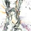 hare26web