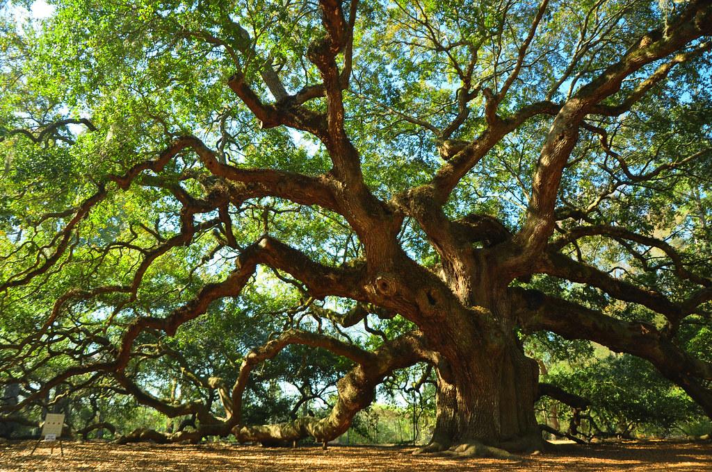 Tree Dr Oak Island Nc