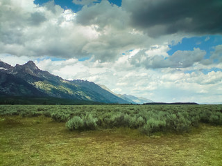 Sagebrush, Grand Teton