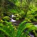 Spring Eden - Columbia River Gorge, Oregon by Adrian Klein