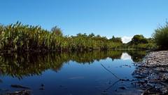 Pine Ridge Conservation Park IV