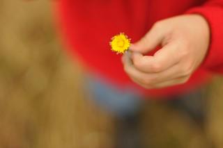 Chosen Flower
