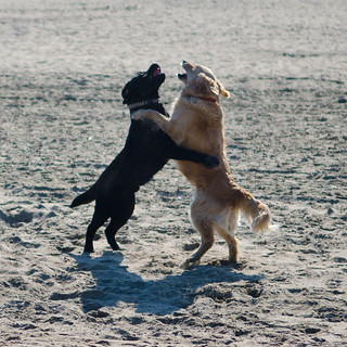 Dancing Dogs on the beach