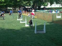 Dog races in L'Isle Adam