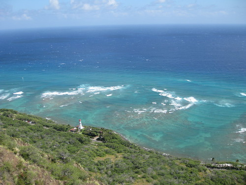 Coral reef beneath Diamond Head.