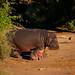 Familia de hipopótamos #1 by EligeNuestraAventura