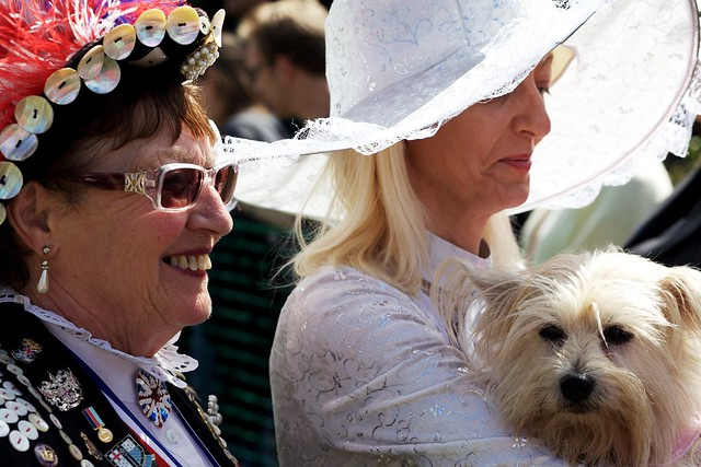 Kensington Dog Show