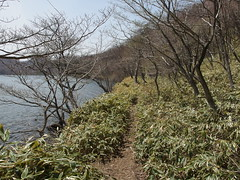 Lakeside path near Lake Onuma @ Mount Akagi area