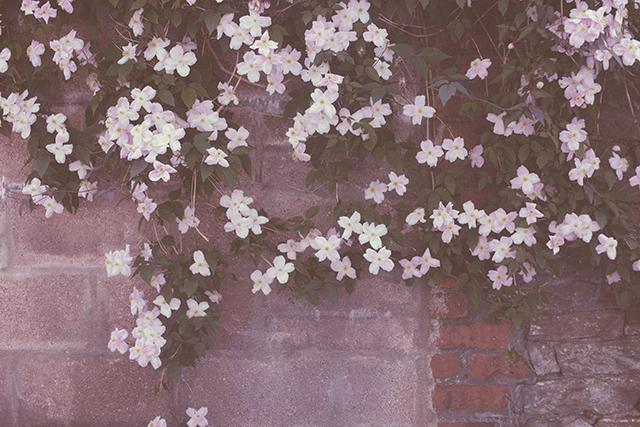 pinky purple flowers