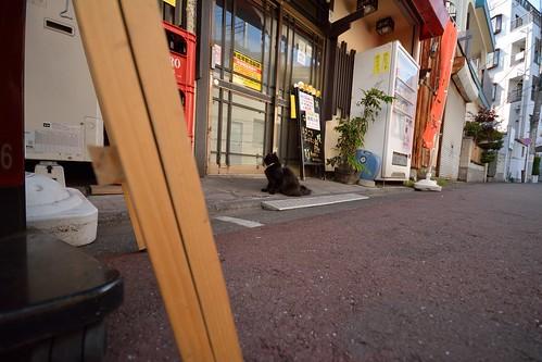 超広角で撮影したネコの写真