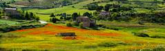 Colori di Sicilia 2
