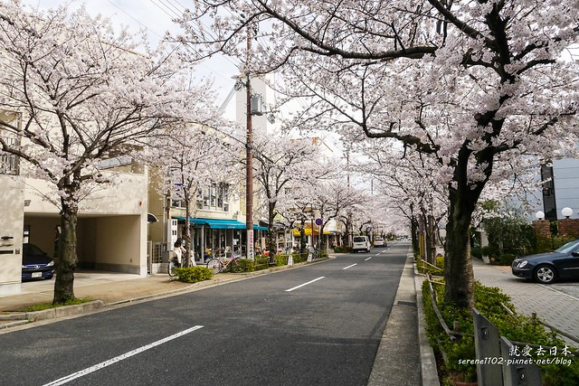 0331D6姬路、神戶_263