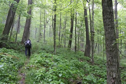 hiking catskills catskill catskillmountains bigindianwilderness seagartrail