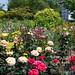 Benton Franklin Master Gardeners Demonstration Garden