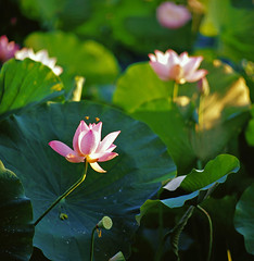 0413-10-20110612台南白河