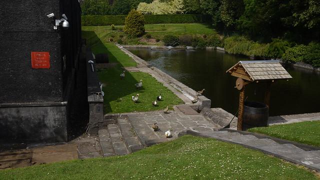 2011-06-17 051 Glencadam Distillery