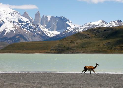 Argentina animal
