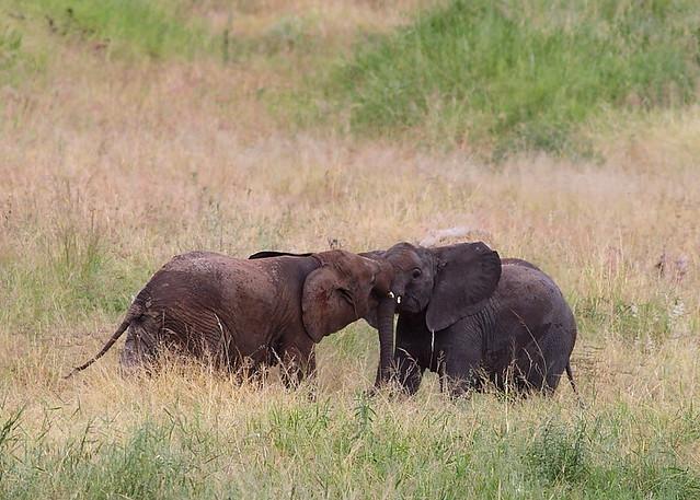 Fotos de elefantes beb s imagui - Fotos de elefantes bebes ...