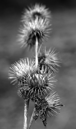 Spiky  by Andy Pritchard - Barrowford