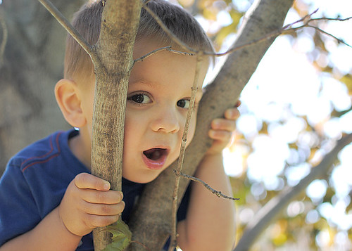 Toddler in a Tree 4