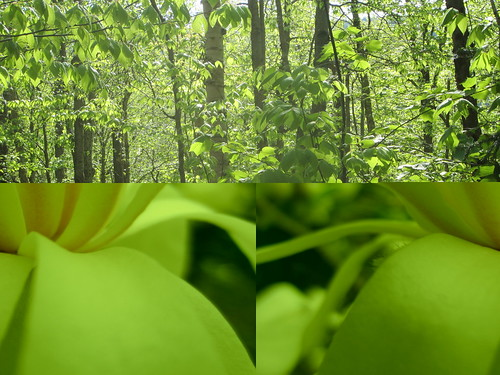 Strange Greening