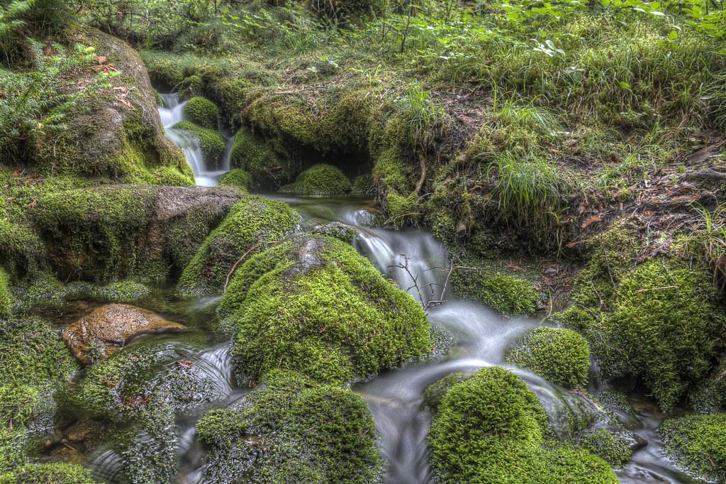 Trickling Stream