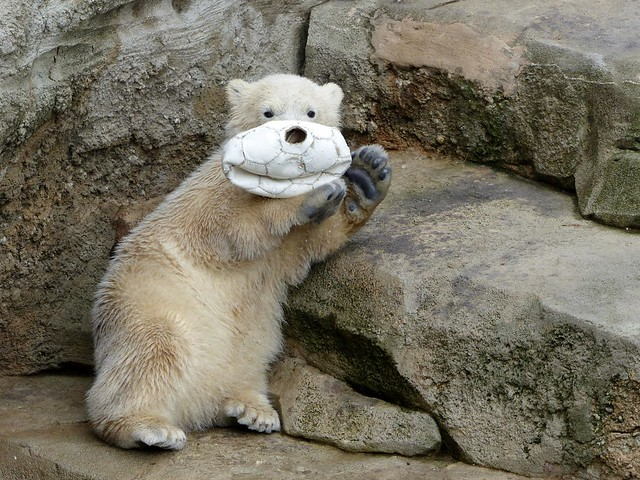 Polar Bear Cub Lale