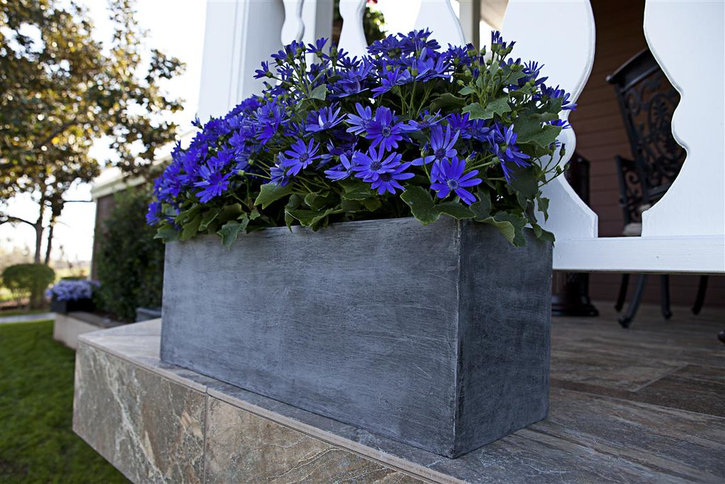 Modern Window Box
