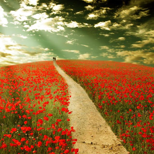 ~ the way to dreamland ~