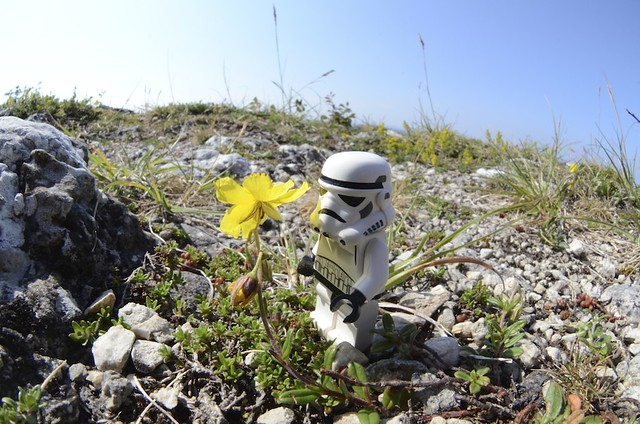 The Stormtrooper And The Opitimism We Must Cultivate Our Garden Flickr Photo Sharing