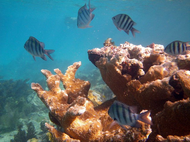 Snorkeling At Trunk Bay, St John | SNORKELINGDIVES.COM™