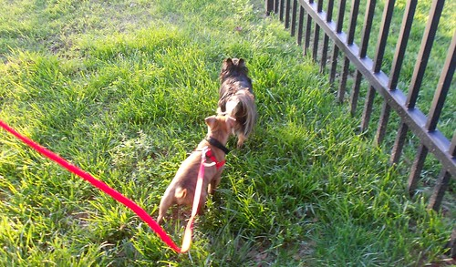 Hector Follows Itzl