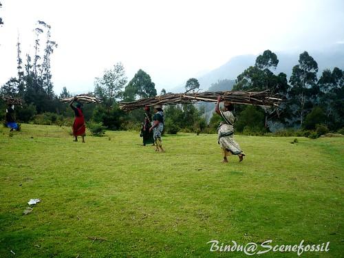 3. Women, forest, firewood, Kodaikanal