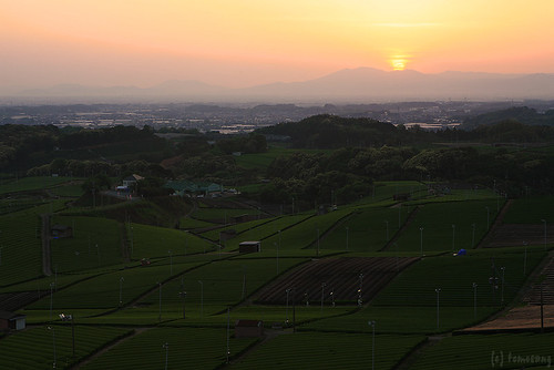 sunset green japan garden tea fukuoka 夕日 緑 福岡 新緑 新茶 茶園 yame 茶畑 八女 八女茶 yamecentralteagarden 八女中央大茶園