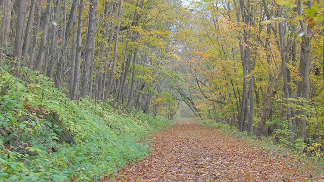 A walk along the New River Trail is a great way to enjoy the season