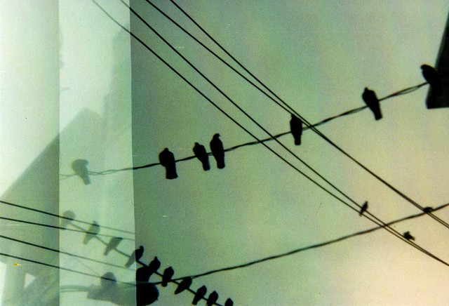 Diana Photography: Birds on a Wire