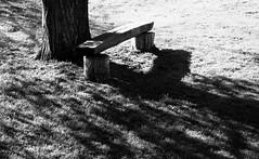 L'arbre et le banc