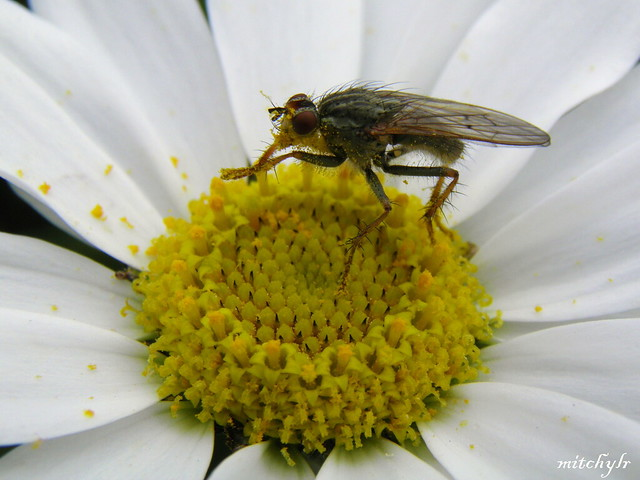 Fly On Flower 1