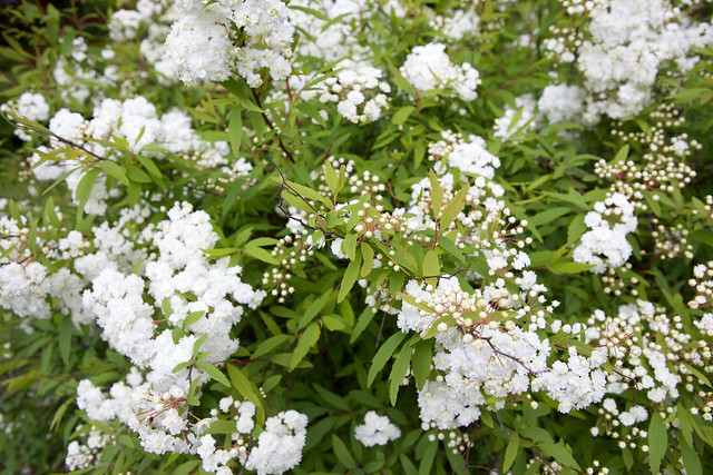 white flower. Botanical garden. Lviv, Ukraine