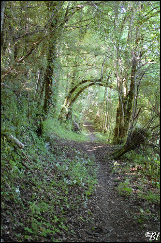 Un charmant petit sentier en sous-bois le long d'un ruisseau -1