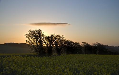 cloud sunrise earlymorning dorset oilseed