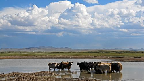 landscape mongolia d200 mongolei bulganaimag