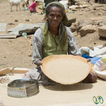 Sifting Tef at the Debark Market - Ethiopia