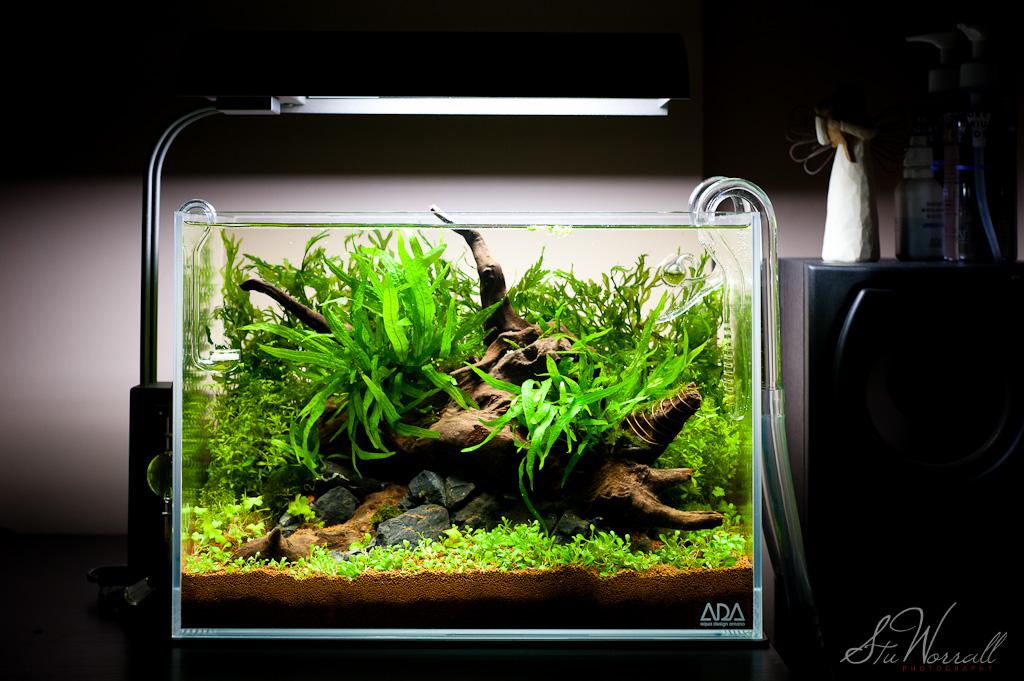 stu 39 s ada mini m aquascaping world forum. Black Bedroom Furniture Sets. Home Design Ideas