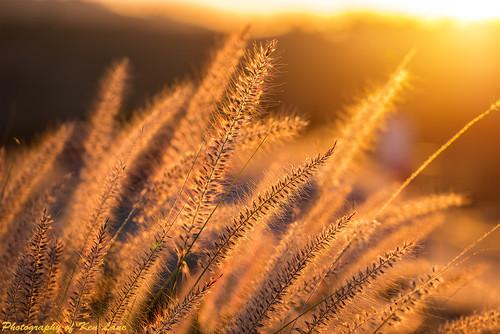 california sunset grass losangeles warm outdoor hollywood backlit