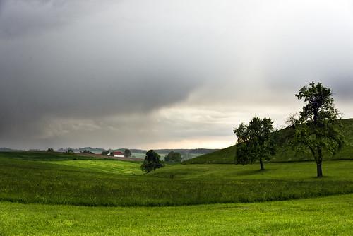 Mairegen, Schildorn