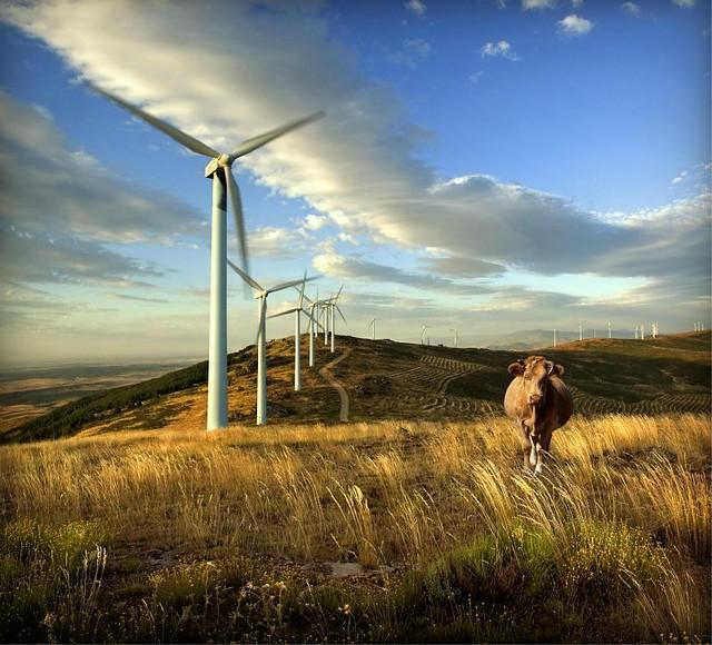 1_renovables uriguay diarioecologia.jpg