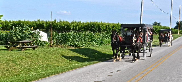 Buggy Tours - Amish Tour - Lancaster County PA