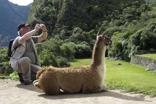 lhama e turista